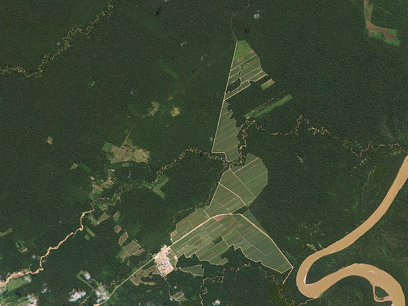 How warming and deforestation transform the Amazon Basin into a source of CO2